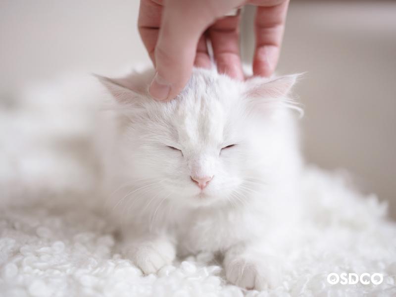 ฝึกลูกแมวให้มีพฤติกรรมที่เหมาะสม