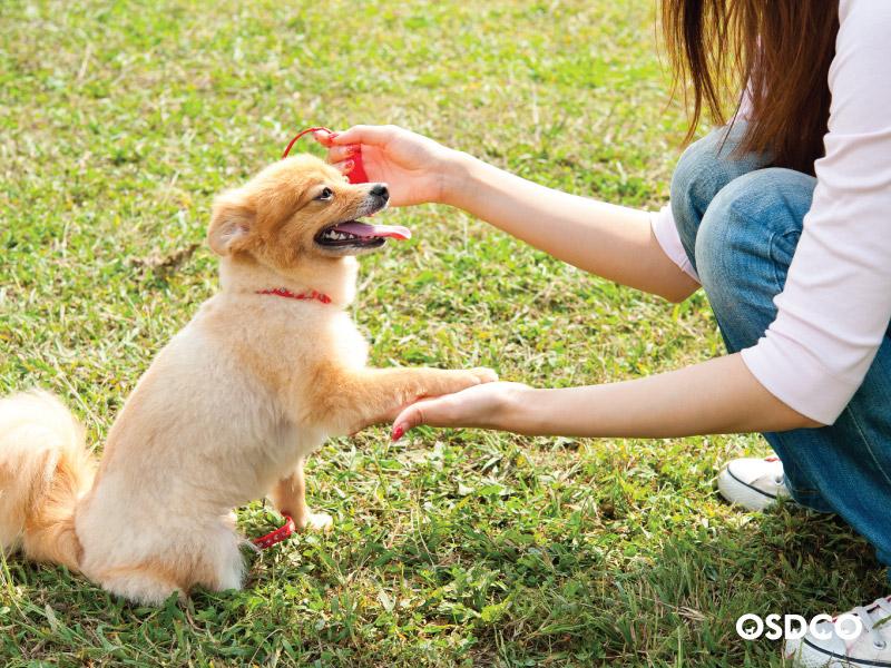 ฝึกลูกหมาให้เชื่อฟัง